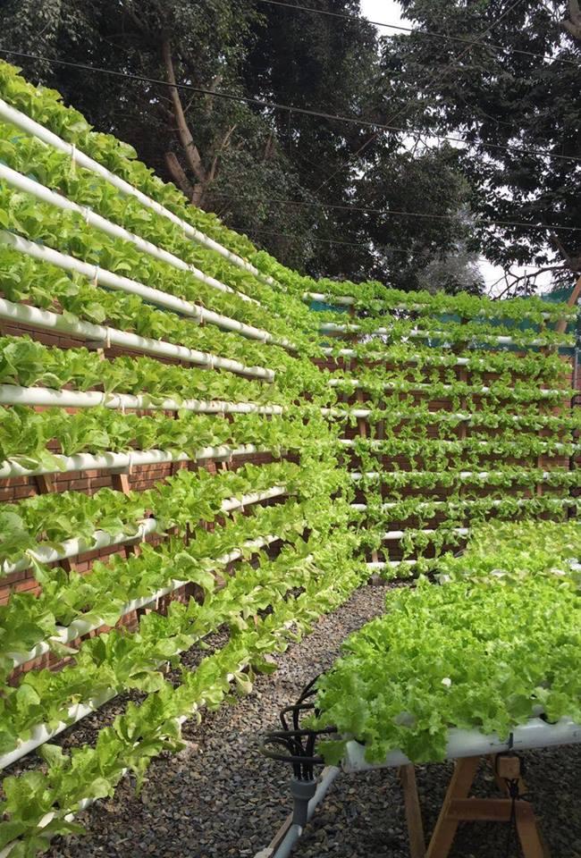 Cultivo hidropónika