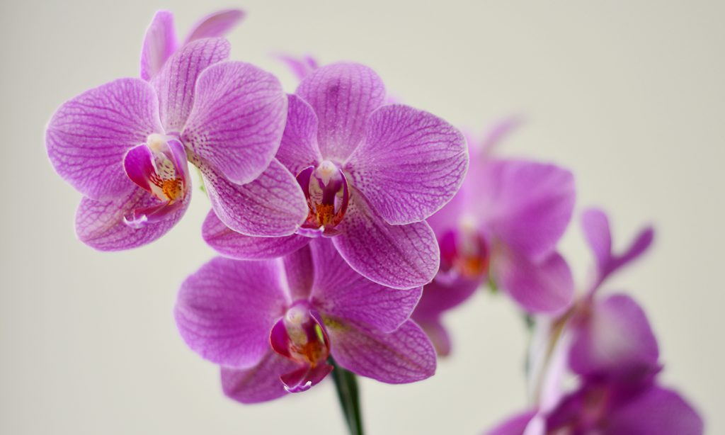 Orquídeas En Verano Delicadeza A Flor De Piel