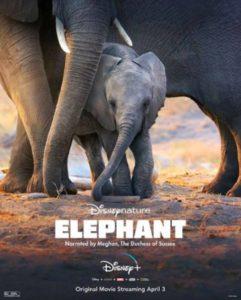 meghan elephant