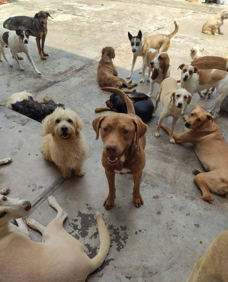 Por amor a las mascotas perros y gatos 3