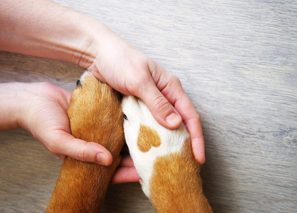Por amor a las mascotas perros y gatos 1