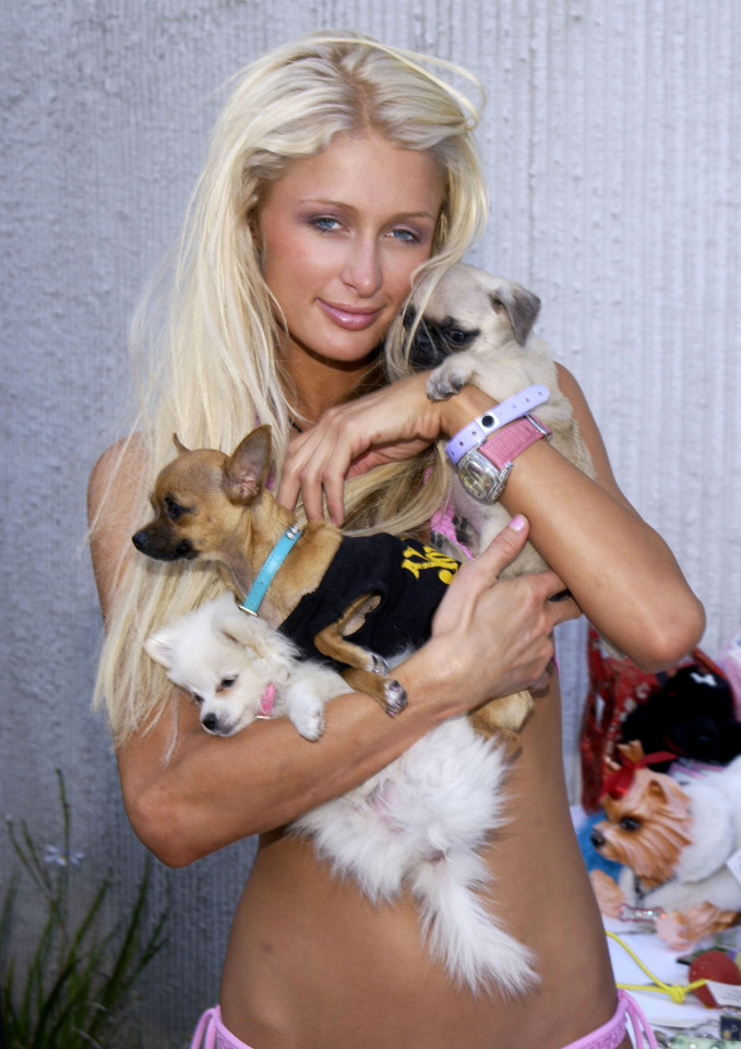Paris Hilton y cachorros
