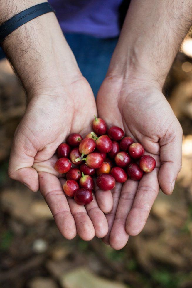café de especialidad peruano
