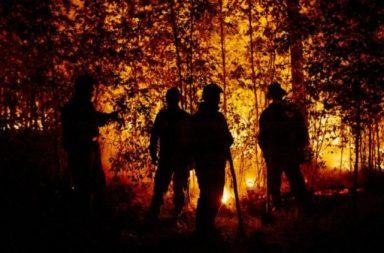 incendios forestales - web